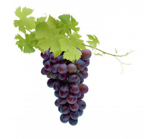 Beneficial Bites - Grapes